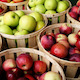Wrapping-Up-The-Apple-Harvest
