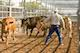 New-Educational-Series-Helps-Ensure-Low-stress-Cattle-Handling