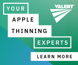 Apple Thinning 4-16-21
