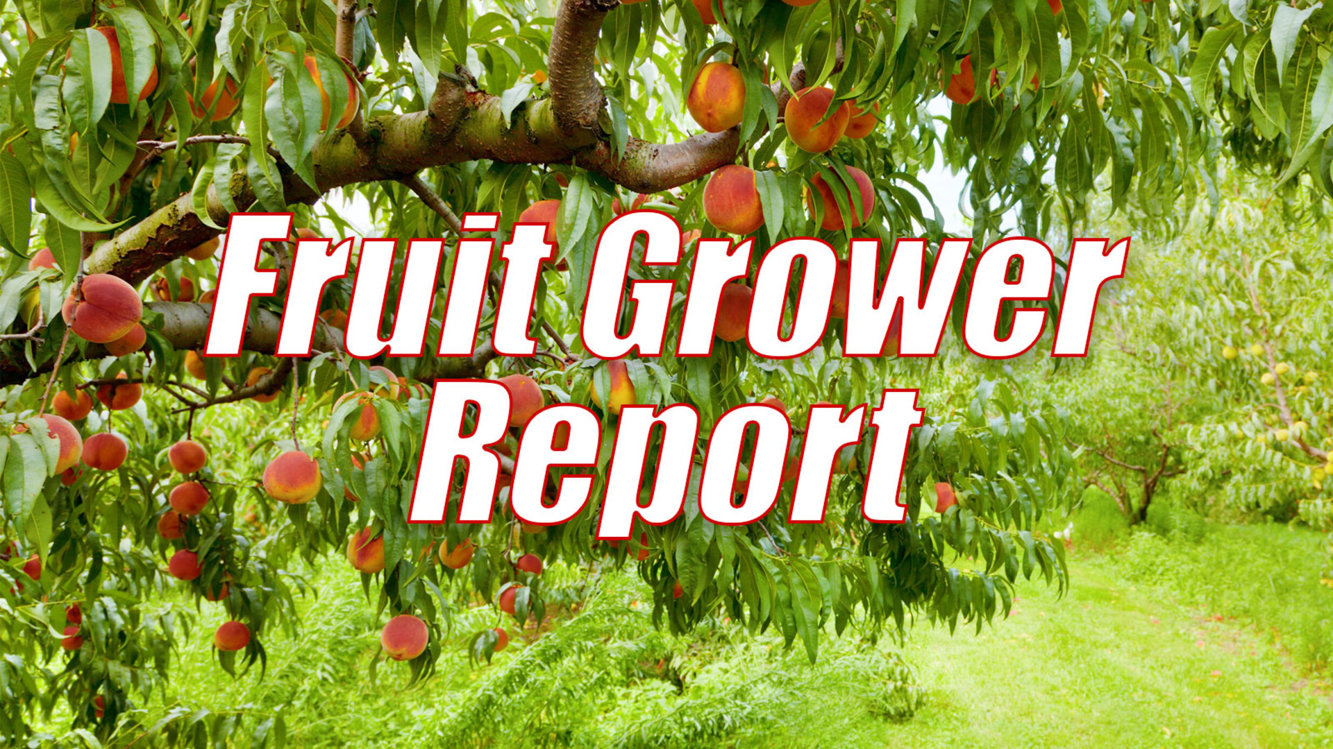Fruit Grower Report
