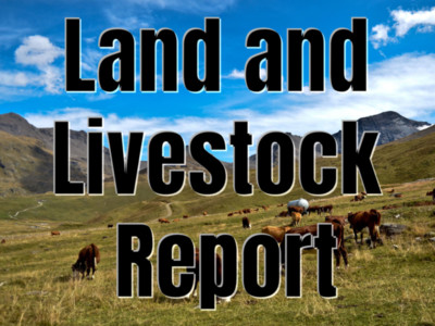 Cow Stayability Brings Productivity and Profits to Ranchers