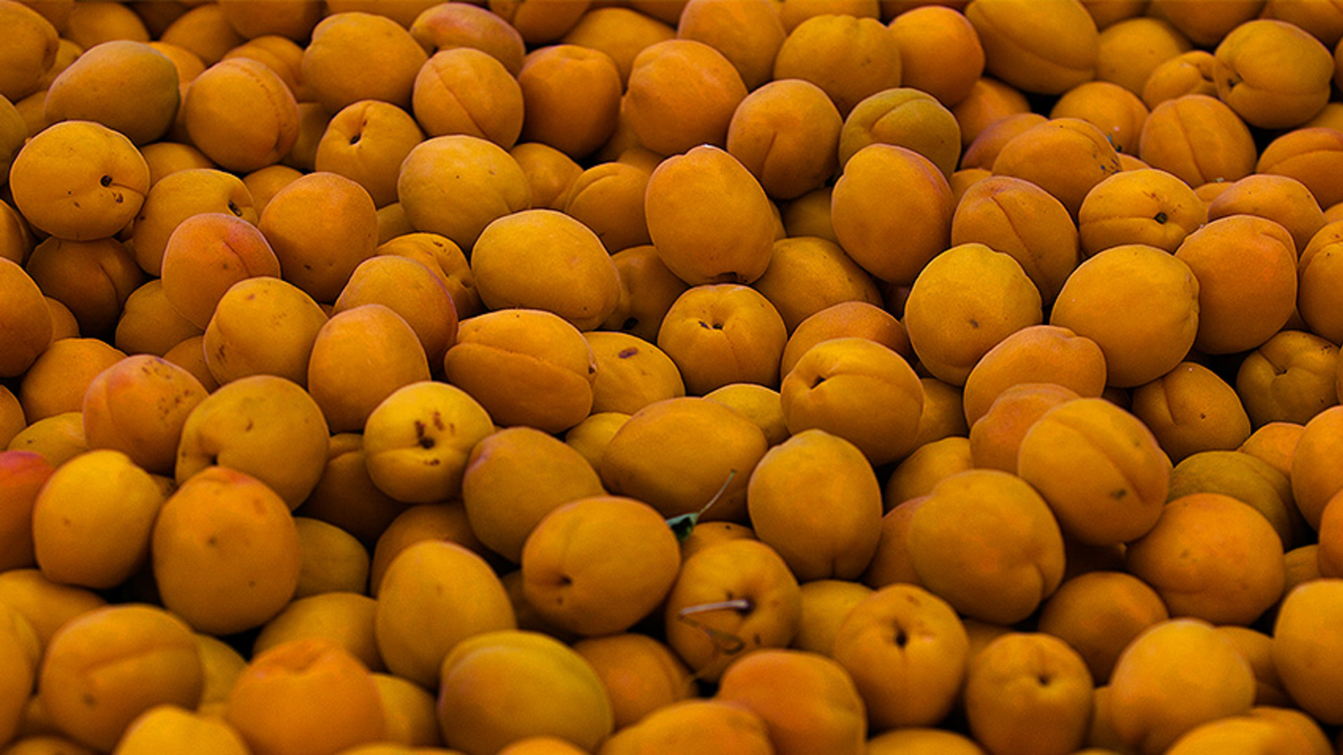 Apricot Production Down Pt 1