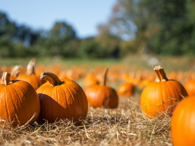 USDA Says Most U.S. Pumpkins Are Produced in 10 States
