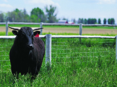 Agri Beef's Wagyu Program a Win for Ranchers