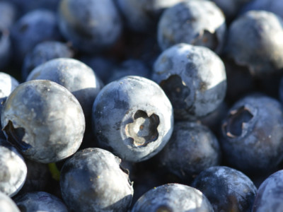Blueberries Organic Vs Conventional Pt 1