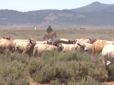 Ranchers Applaud Announcement Of New NEPA Rules