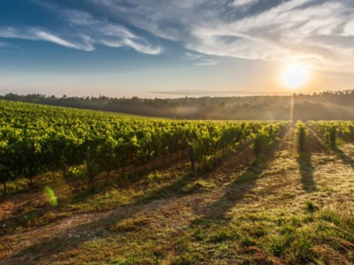 Sonoma County Winegrowers Committed to Sustainability