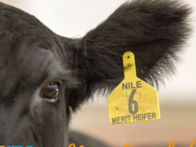 NILE Merit Heifer Application Now Available for 2021