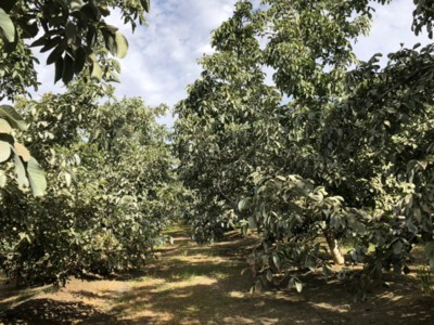 California Walnuts Are Poised for a New Season