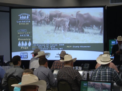 Superior Livestock June Auction Schedule Location Changes