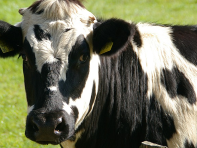 Dairy Farmers Ready For Market Changes