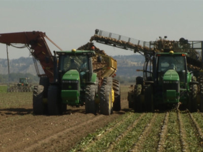 Solid Rebound Expected for U.S. Sugarbeet Industry