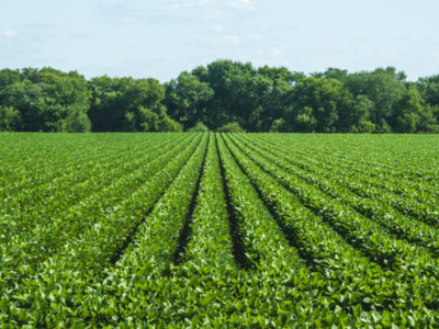 Dicamba Registrations Vacated