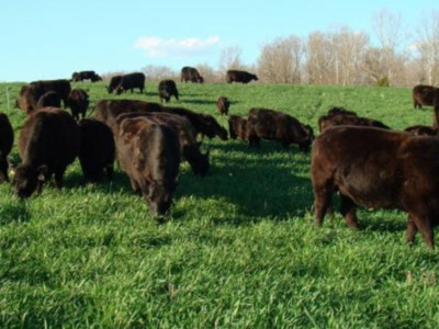 Test Forages for Nitrate Before Haying or Grazing