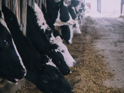 Genomic Testing for Healthier Dairy Herds