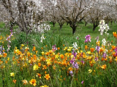 The Almond Board Launches B + scholarship to Promote Bee Friendly Farming