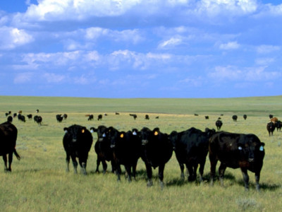 PerforMix Helping Producers Keep Cattle Healthy this Summer