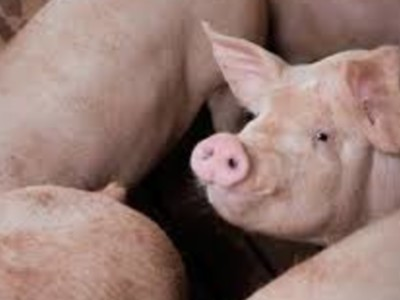 Swine Health Certification System