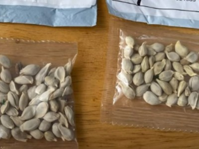 U.S. Residents Receiving Unsolicited Seeds from China