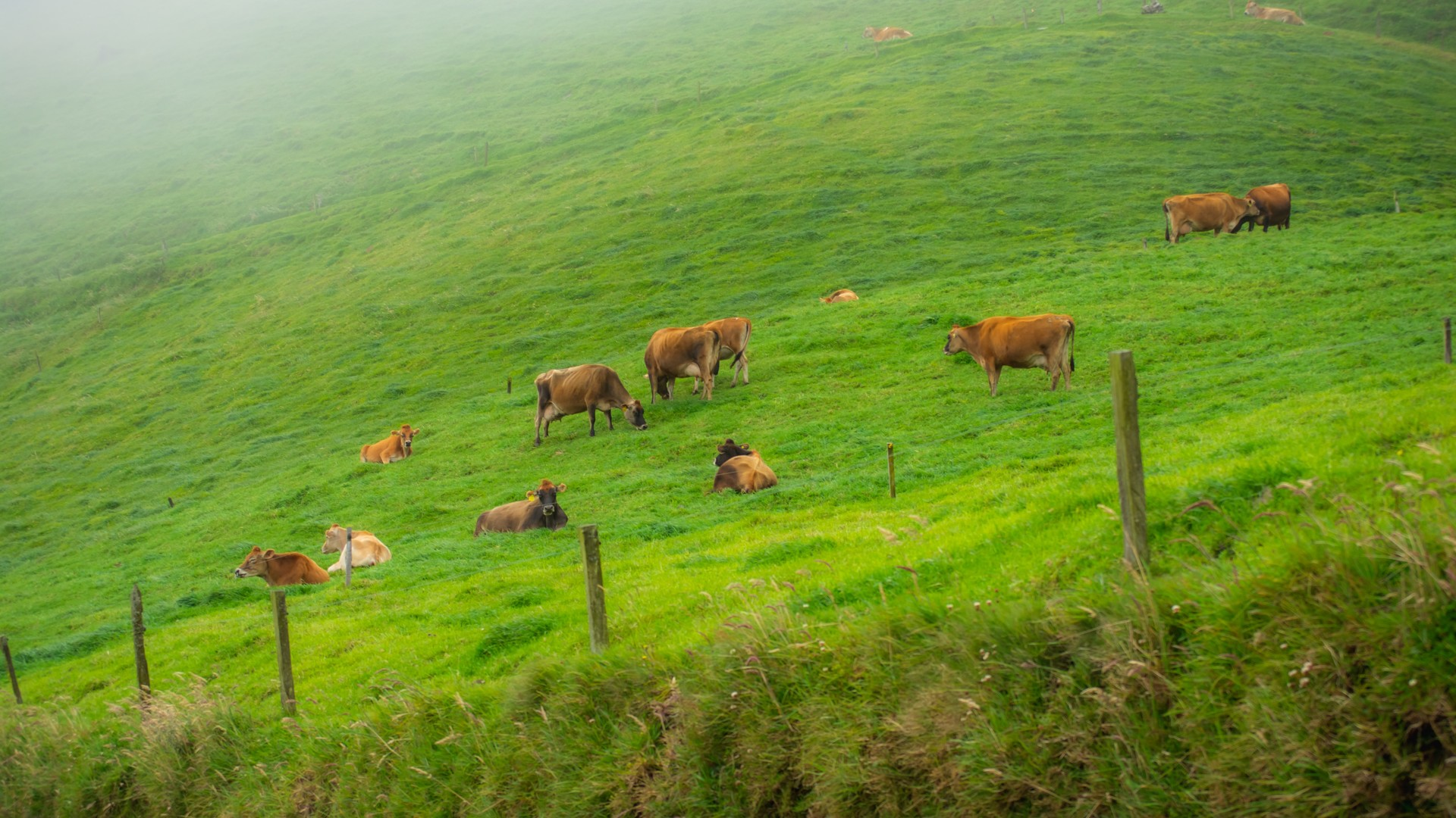 Livestock and Soil Health