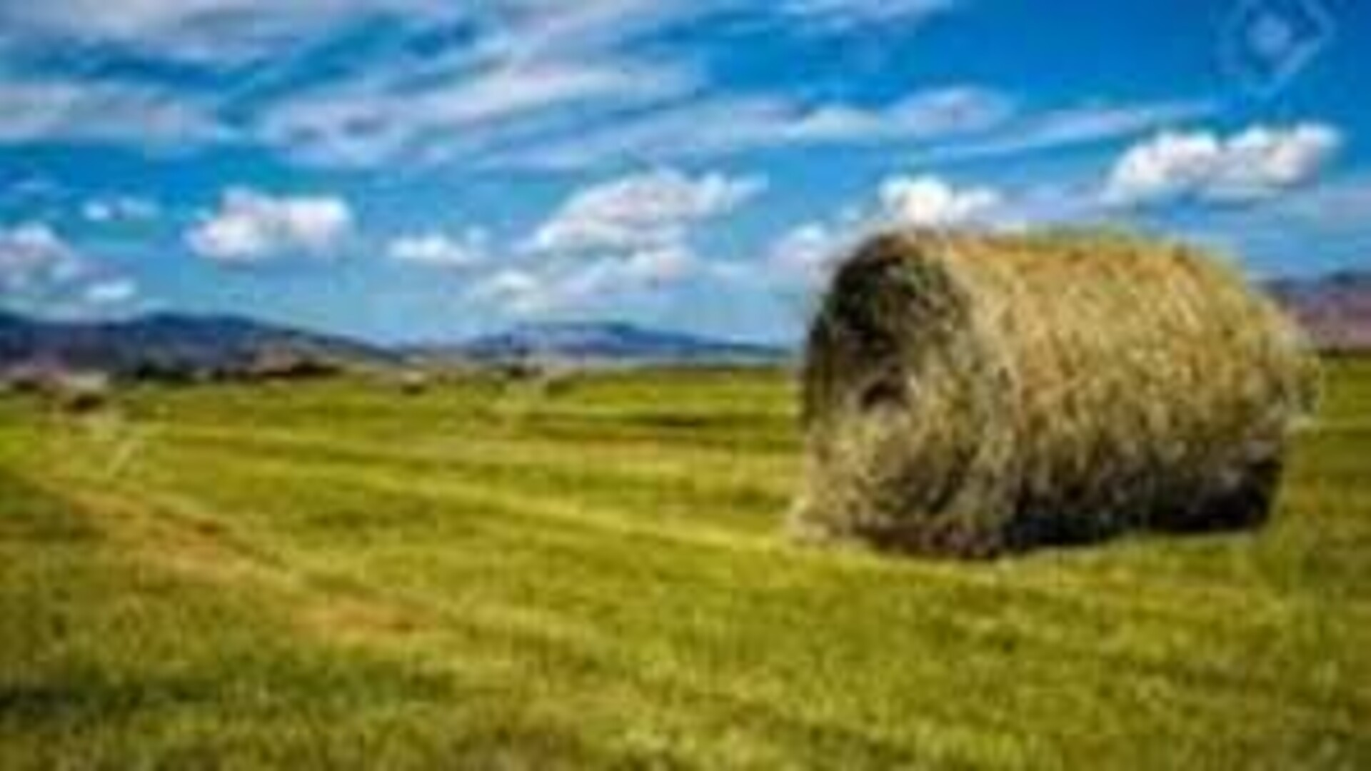 Colorado Hay Report