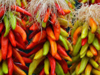 September is for Chile Peppers