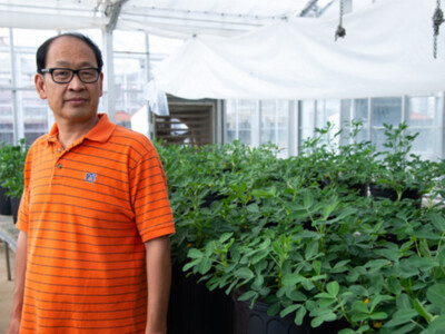 Developing a More Drought-Tolerant Peanut