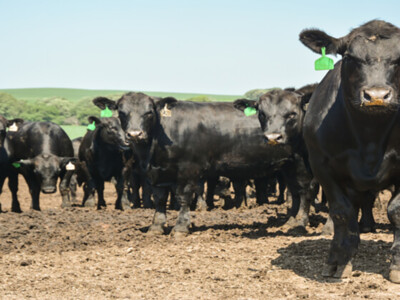 CattleFax Outlook for Beef Industry
