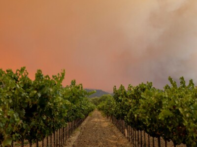 Wine Grapes and Wildfire Smoke Pt 3