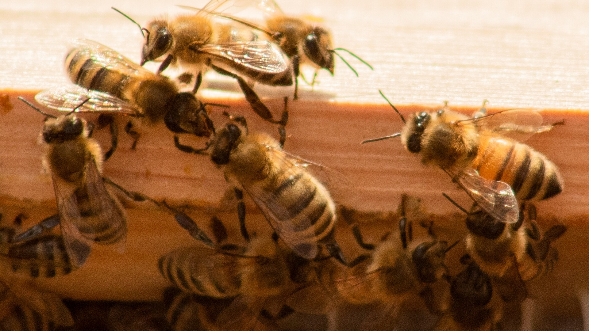 Virtual Honey Bee Disaster Assistance Workshop