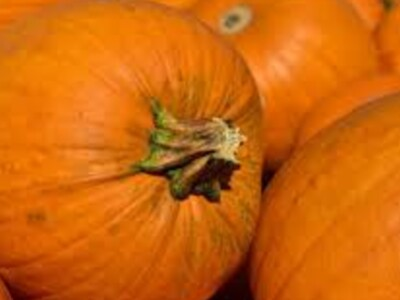 Last Chance for Pumpkin Patches