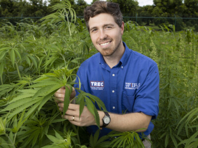 University of Florida's Industrial Hemp Pilot Project