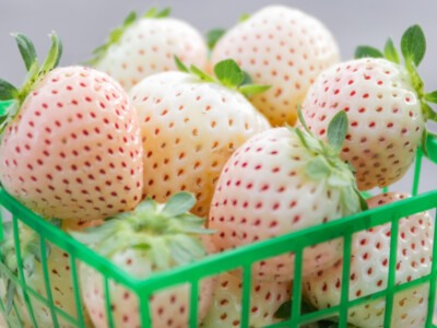 University of Florida Develops White Strawberry Variety