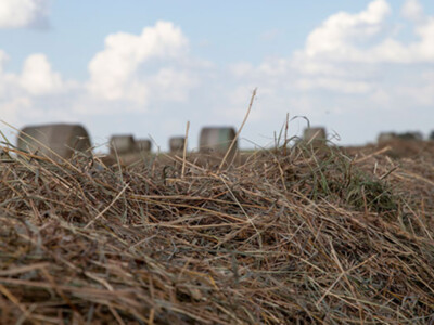 New CRP Enrollment Offers Opportunity for Grazing & Haying