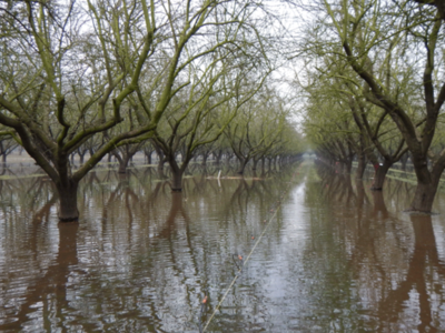 Recharging Groundwater With Flood waters In Almonds