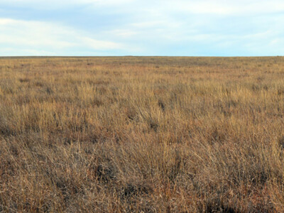 USDA Extends General Signup for Conservation Reserve Program