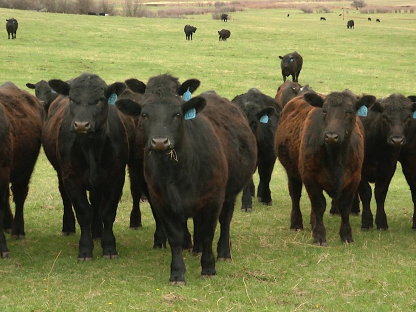 Optimism in Beef Industry Fueled by Strong Demand with Higher Prices Anticipated