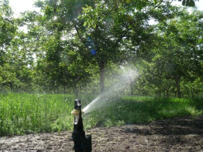 Irrigation on Light or Heavy Soils