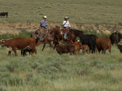 Cattlemen Support the Death Tax Repeal Act of 2021