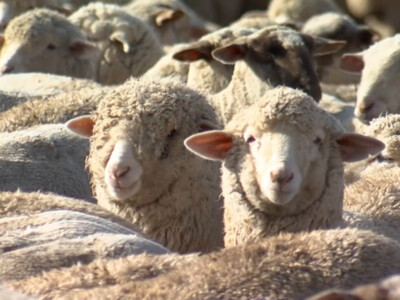 American Lamb Board Announces Industry Storytelling Video Contest