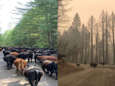 Cattle Rancher to Congress: Active Management Necessary to Curb Wildfires