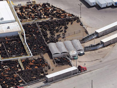 Capacity Constraints in U.S. Beef Supply Chain