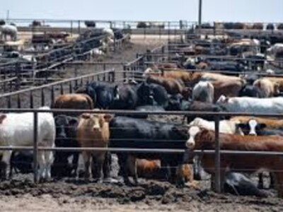 Cattle Industry Groups Hold Closed-Door Meeting to Discuss Price Imbalances